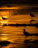2011-09-27-pismo-beach-santa-barbara