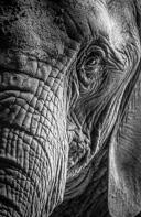 2013-08-25-zoo-basel