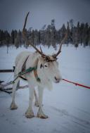 2017-02-04-finnland